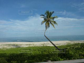 自然,海,空,木,屋外,ビーチ,青空,砂浜,水面,海岸,樹木,風,カリブ海,ポジティブ,眺め
