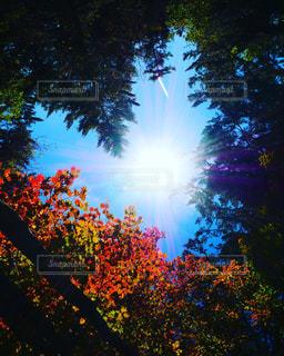 風景,空,秋,紅葉,屋外,葉,日光,山,栃木県,日光市,草木