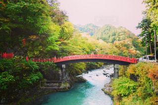 葉,景色,栃木県,日光市,神橋