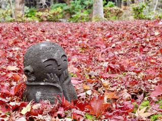 圓光寺の写真・画像素材[1665837]