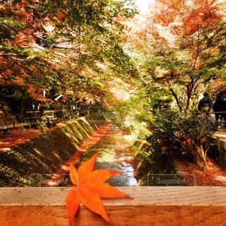 紅葉のトンネルの写真・画像素材[1666055]