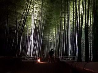 ライトアップされた竹林の写真・画像素材[1666170]
