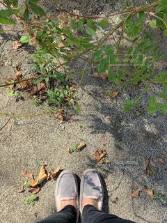 秋,靴,お散歩,フラットシューズ,履物,モカシン,ボアシューズ