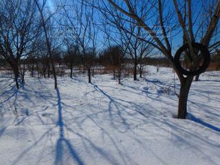 雪の側に木にパス対象フィールドの写真・画像素材[1682779]