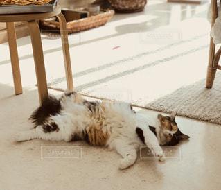 地面に横になっている猫の写真・画像素材[1644637]