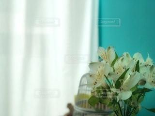 窓辺のお花の写真・画像素材[3341900]