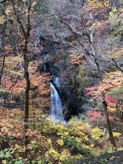 自然,秋,紅葉,群馬県,小中大滝展望台