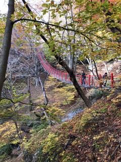 秋,紅葉,群馬県,けさかけ橋,小中大滝展望台