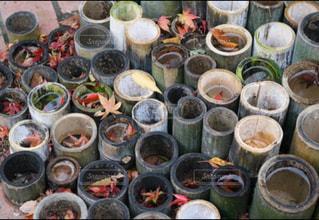 自然,秋,紅葉,観光,旅行,箱根,女子旅,神奈川県,モミジ,箱根園