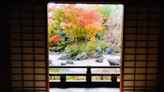 自然,秋,紅葉,京都,カラフル,もみじ,嵐山,11月,モミジ,屏風,多色