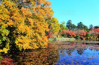 自然,紅葉,京都,水面,池,景色