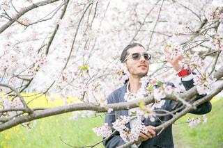 桜と菜の花との写真・画像素材[1706706]