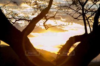 自然,空,夕日,屋外,太陽,光,樹木,パワー