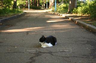 猫,公園,動物,屋外,樹木,ペット,人物,歩道,地面,ネコ