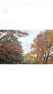 自然,秋,冬,紅葉,緑,カラフル,山,景色,色とりどり,色