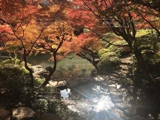 秋,紅葉,屋外