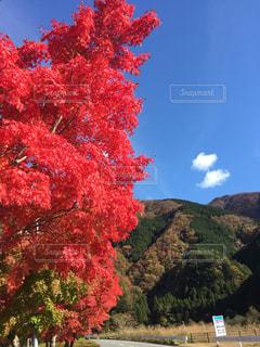 自然,空,紅葉,屋外,景色,樹木,旅行