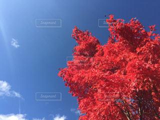 自然,空,紅葉,景色,樹木,旅行