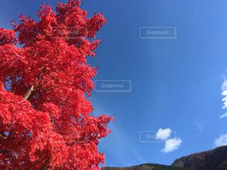 自然,空,紅葉,屋外,景色,樹木,旅行,草木,カエデ