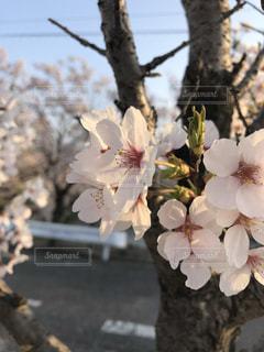 木の花の花瓶の写真・画像素材[1850340]