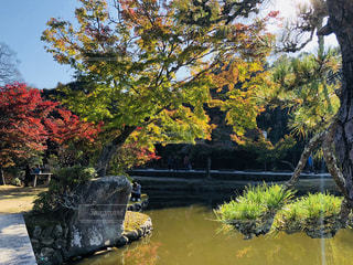 池の像の写真・画像素材[1611042]