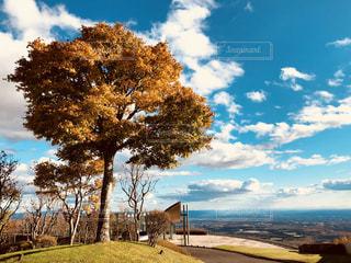 近くの木のアップの写真・画像素材[1611071]