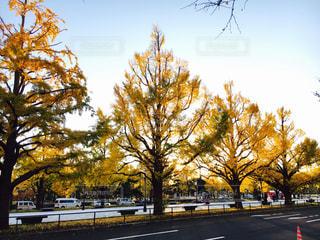 屋外,道路,樹木,通り,整列