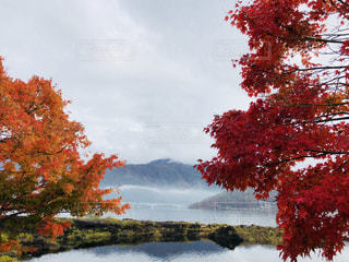 水の赤い葉の木の写真・画像素材[1611799]