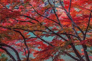 近くの木のアップの写真・画像素材[1611919]