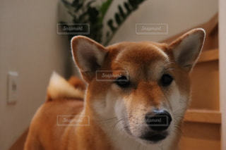 鏡の前で座っている犬の写真・画像素材[1612855]