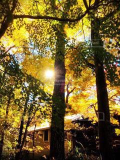 近くの木のアップの写真・画像素材[1614333]