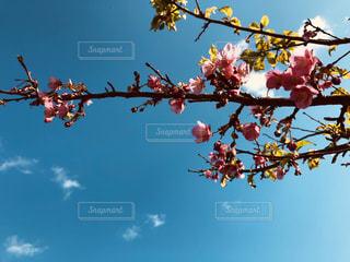 花,春,樹木