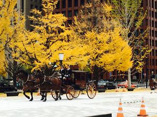 黄色,樹木,馬,草木