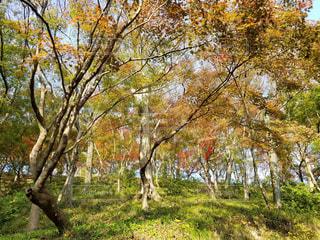 秋,紅葉,散歩,秋晴れ,福井,西山公園,子連れ,散策,福井市