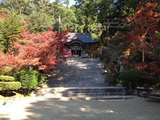 自然,森林,屋外,神社,景色,草木