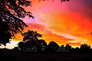 日没の前に大きな木の写真・画像素材[1304878]