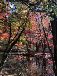 秋,紅葉,軽井沢,雲場池