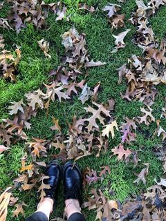 秋,紅葉,旅行,旅,ニュージーランド,オークランド