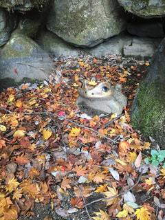 公園,紅葉,森林,屋外,景色,鮮やか,樹木,石,カエル,開運