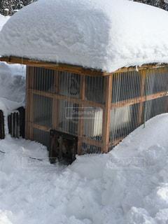 大雪の犬小屋 冬囲いの写真・画像素材[1667112]