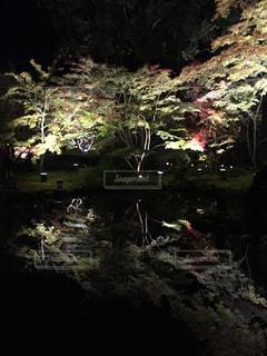 自然,紅葉,森林,池,ライトアップ,松島