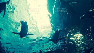 青,水,水族館,水面,水色,日差し,ペンギン,未来,アクアリウム,希望,可能性