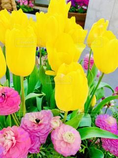 公園,花,春,黄色,鮮やか,プランター,flower,イエロー,カラー,黄,草木,yellow,ガーデン,大船フラワーセンター