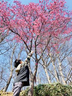 桜にjumpの写真・画像素材[1856382]