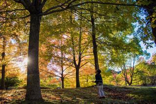 秋の夕暮れ…の写真・画像素材[1622402]