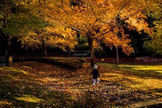 草の覆われたフィールド上を歩く男の写真・画像素材[1622449]