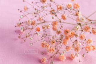 近くの花のアップの写真・画像素材[1817945]