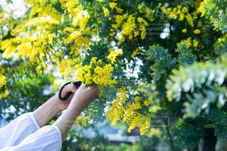花を持っている人の写真・画像素材[1869764]
