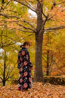木の上に座っている人の写真・画像素材[2547970]