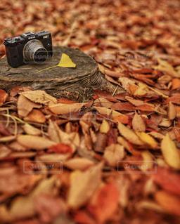 秋色世界の写真・画像素材[1651355]